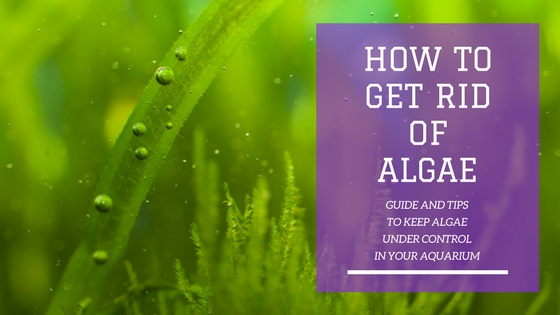 How to Get Rid Of Algae