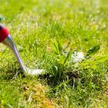 how-to-get-rid-of-crabgrass