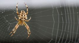 How to Get Rid Of Spiders on Porch