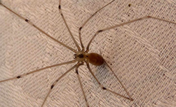 How to Get Rid of Daddy Long Legs Naturally