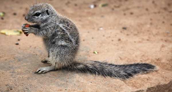How to Get Rid of Ground Squirrels