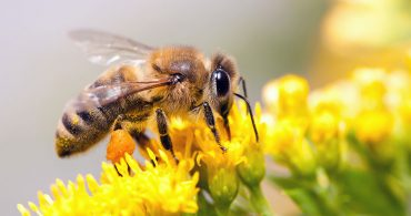 How to Get Rid of Honey Bees Without Killing Them