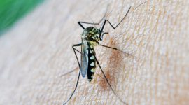 How to Get Rid of Midge Bugs Naturally