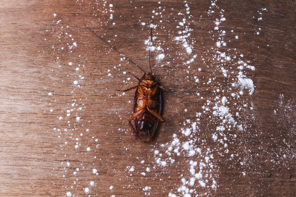 How to Get Rid of Roaches with Borax