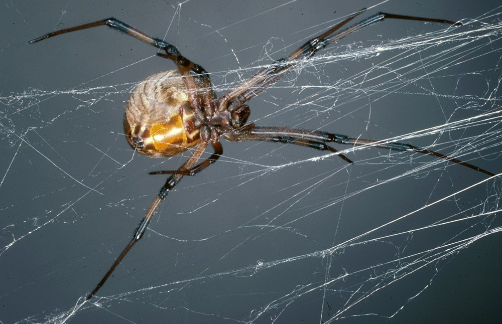 How to Get Rid of Spiders with Peppermint Oil