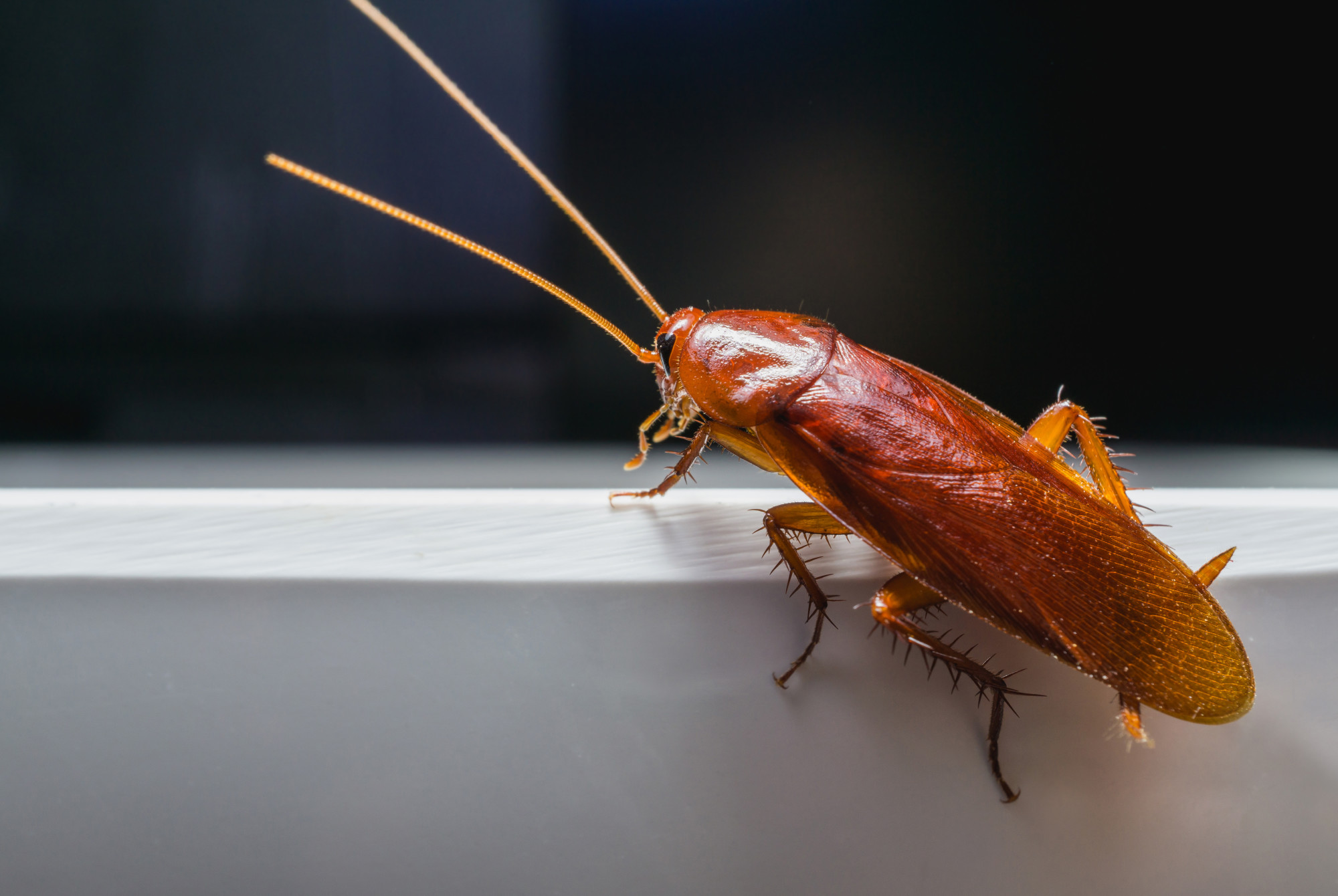 How to Keep Roaches Away From Your Home
