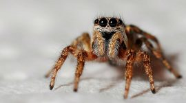 How to Keep Spiders Away While Sleeping?