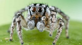 How To Get Rid Of Jumping Spiders Naturally