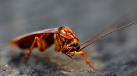 How To Get Rid Of Roaches Without An Exterminator