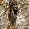 How To Get Rid Of Water Boatmen Naturally