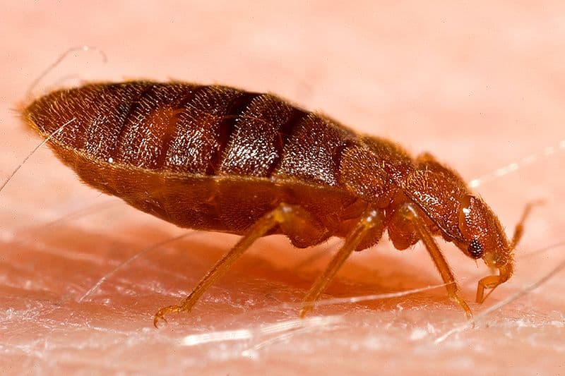 How to Get Rid of Bed Bugs with Dryer Sheets
