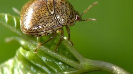 How to Get Rid of Kudzu Bugs Naturally