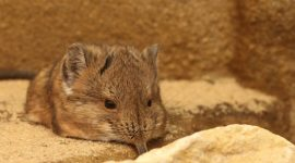 How to Get Rid of Shrews Naturally