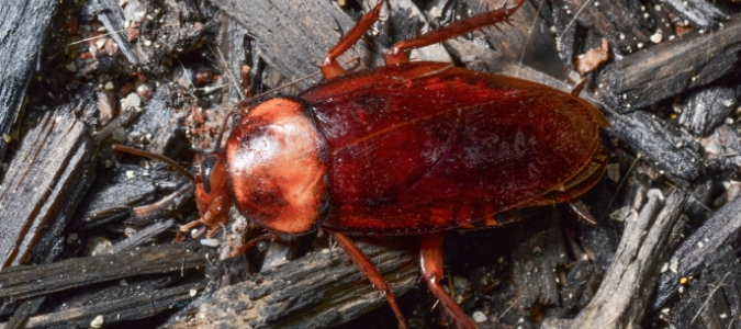 How to Get Rid of Tree Roaches