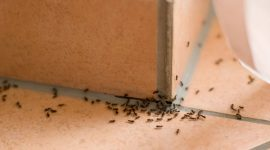 Ant Control Methods: How To Get Rid of Them Naturally