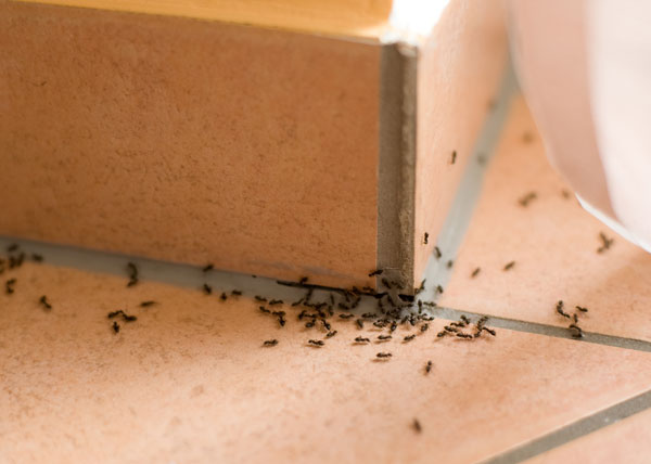 Ant Control Methods - Photo by domyown
