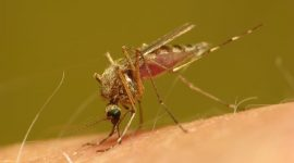 Are Mosquitoes Attracted to Light?