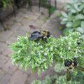 Best Carpenter Bee Traps- Photo by HGTV