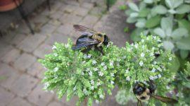 Best Carpenter Bee Traps
