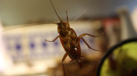 Best Ways To Keep Bugs Out Of Your House