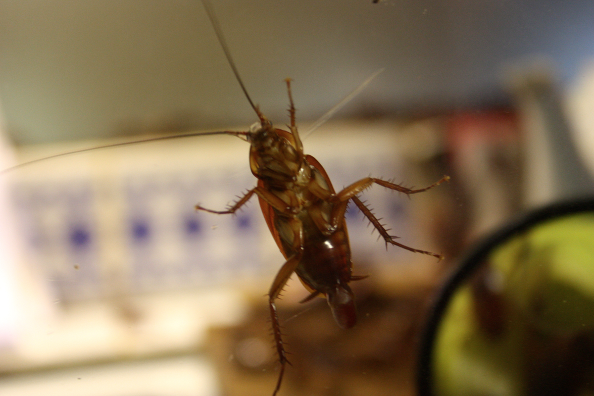 Best Ways To Keep Bugs Out Of Your House - Photo by redandblack