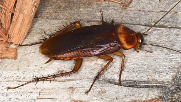 Bugs That Look Like Cockroaches Photo by pestcontrolhacks