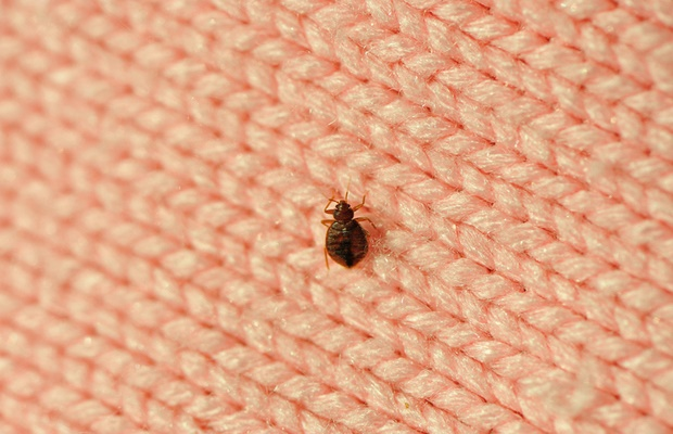 Can Bed Bugs Make You Sick