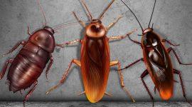 Cockroaches Vs. Beetles