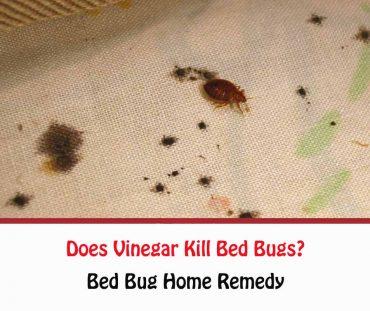 Does Vinegar Kill Bed Bugs?