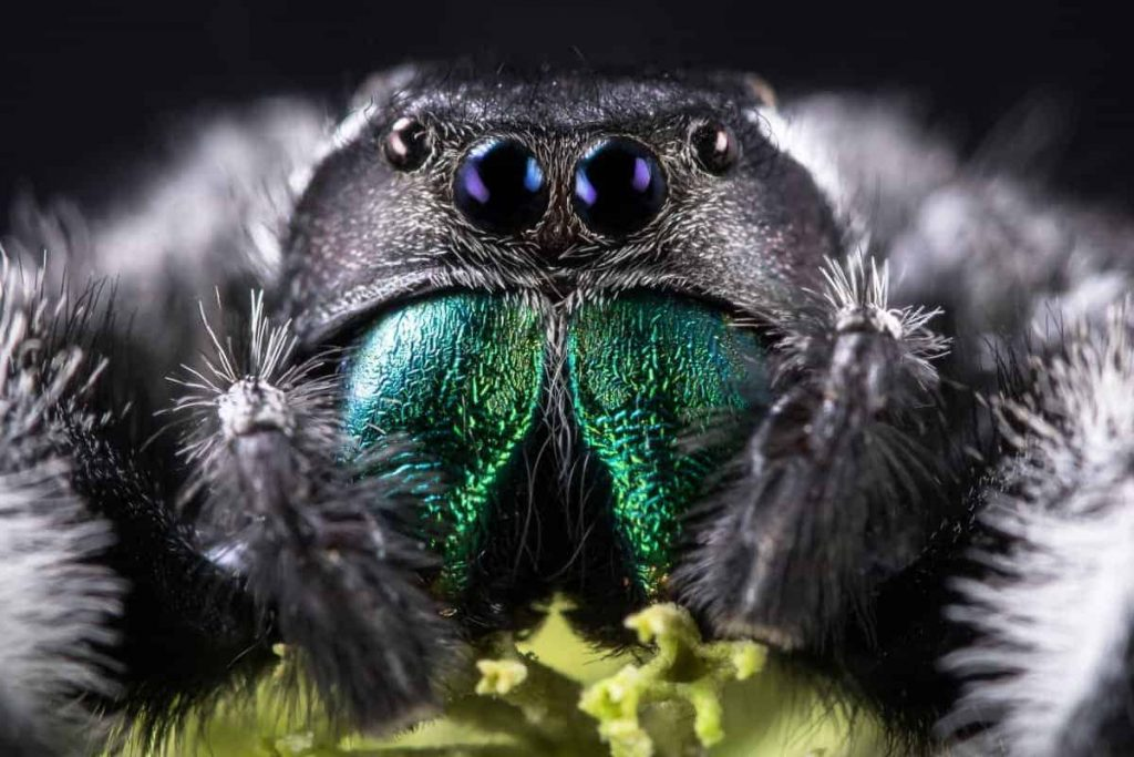How Long Do Spiders Live - Photo by pestcontrolzone