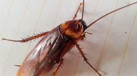 How To Get Rid Of Cockroach Bites?