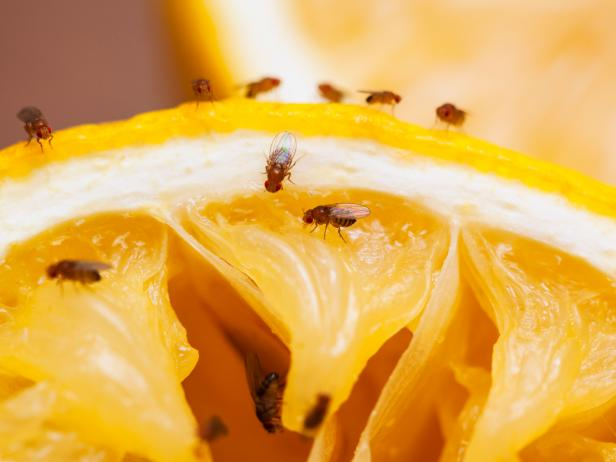 How To Get Rid Of Fruit Flies With Lemon - Photo by foodnetwork