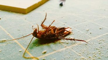 How To Get Rid Of Roaches With Essential Oils?
