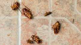How To Use Diatomaceous Earth To Kill Cockroaches?