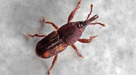 How to Get Rid of Insects From Your Home With Bug Exterminators