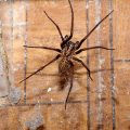How to Get Rid of Spider Infestation In House - Photo by safebrand