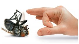 Natural Pest Control – How to Keep Insects Away From House
