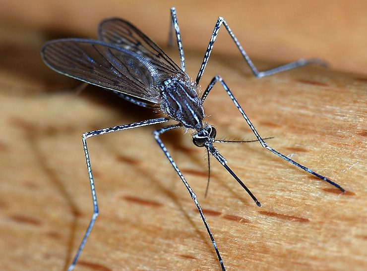 Mosquito Hawks Vs Mosquitoes - photo by knockoutpestcontrolandtermit