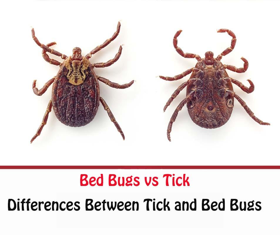 Tick vs Bed Bug