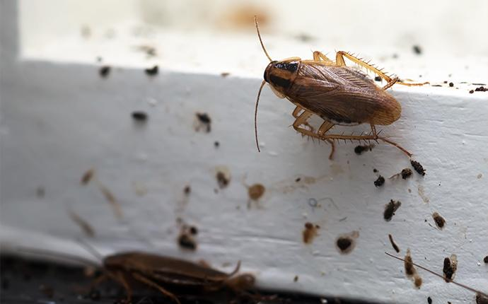 What Do Roach Droppings Look Like - Photo By pestcontrolsolutionsinc