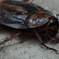 Where Do Roaches Hide - Photo by abchomeandcommercial