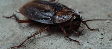 Where Do Roaches Hide?