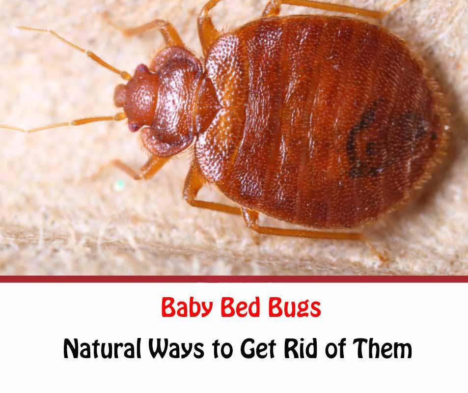 https://www.getridofallthings.com/wp-content/uploads/2020/09/baby-bed-bugs.jpg