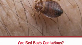 Are Bed Bugs Contagious?