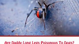 Are Daddy Long Legs Poisonous To Dogs?