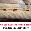 Can Bed Bugs Climb Metal Or Plastic