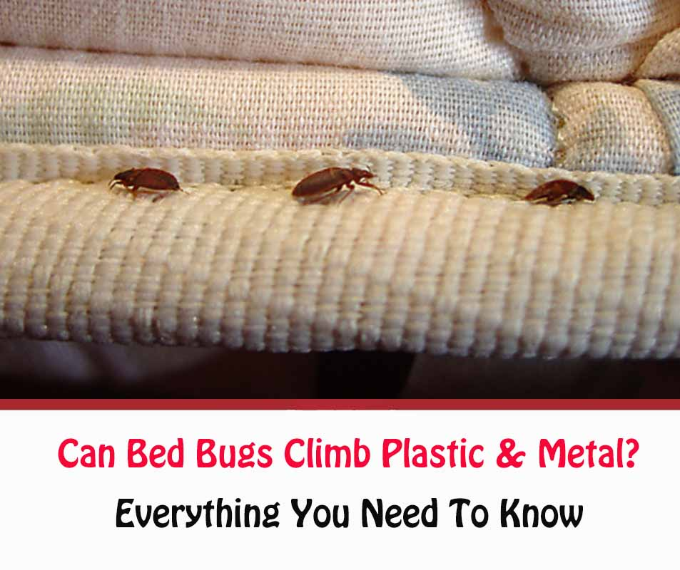 Can Bed Bugs Climb Metal Or Plastic?