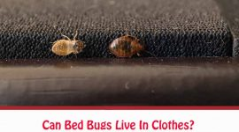 Can Bed Bugs Live In Clothes?