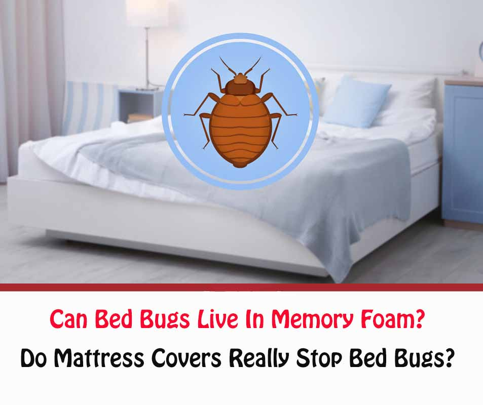 Can Bed Bugs Live In Memory Foam?