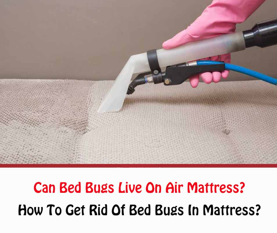 Can Bed Bugs Live On Air Mattress?
